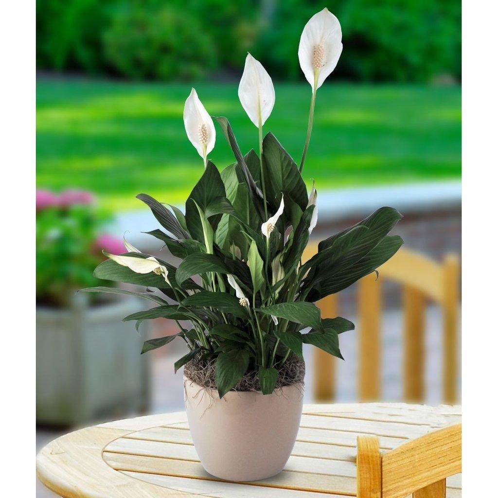 Plants - Legacy Heating
